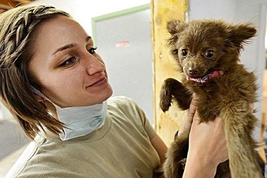 jobs helping sick animals